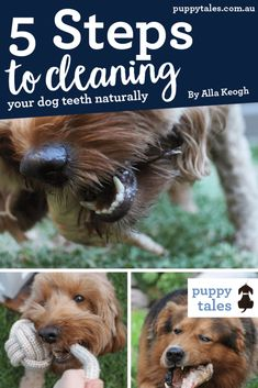 5 steps to cleaning dog teeth naturally | Dental care Canine teeth