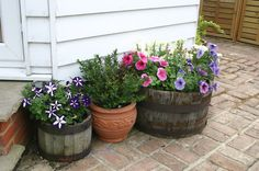Containers on Patio