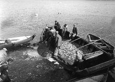 Brislingfiske på Vågen #råkvåg #rakvag #raakvaag #skjørn #skjorn #rissa #trøndelag #norge #norway Norway, Boat, Vehicles, Dinghy, Boats, Car, Vehicle, Ship, Tools
