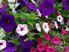 Purple and pink floral display by Marcella Fostey