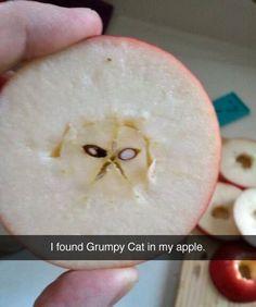 Grumpy Cat apple