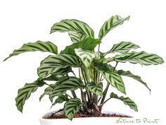 Die neue Lust an Zimmerpflanzen. Über pflegeleichte Pflanzen, verschiedene Substrate und ihre Vorteile und warum Zimmerpflanzen für mehr Glück und Gesundheit sorgen.