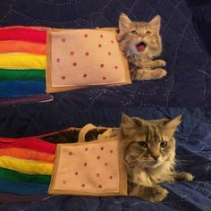 Nyan Cat IRL Then vs Now