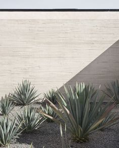 Landscaping Plants, Front Yard Landscaping, Hipster Home, Patio Interior, Aesthetic Photo, Modern Contemporary, Outdoor Living, Backyard, Exterior