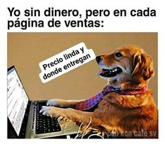 Humor, Dogs, Animals, Funny Puppies, Instagram, Memes En Espanol, Messages, Jokes, Animales