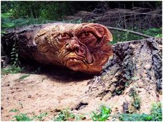 Tommyy Craggs brings trees back to life with his impressive tree sculpting techniques.