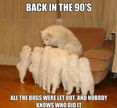 Storytelling Dog meme 10 Funny Pet Memes