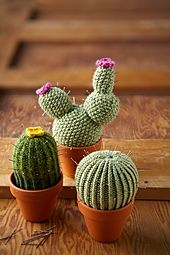 Ravelry: Quick & Easy Cacti pattern by Lucille Randall free pattern just click SKIP AD in top right corner...don't click DOWNLOAD!