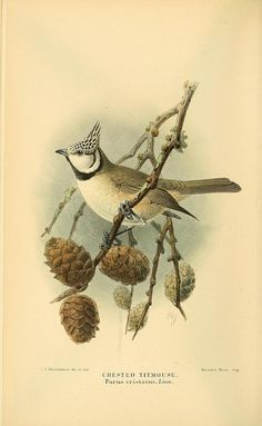 n221_w1150 by BioDivLibrary, via Flickr