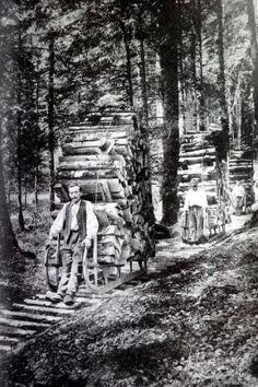 Transport du bois dans les forêts vosgiennes ou schlitte