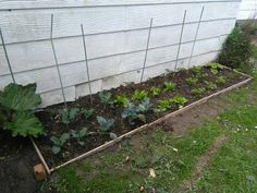 Veggie garden growing well, Will be fertilizing again this afternoon.