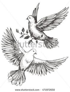 Find Dove Olive Brunches Sketch Vector Illustration stock images in HD and millions of other royalty-free stock photos, illustrations and vectors in the Shutterstock collection. Bird Drawings, Pencil Art Drawings, Realistic Drawings, Art Drawings Sketches, Animal Drawings, Tattoo Drawings, Dove Tattoos, Body Art Tattoos, Sleeve Tattoos