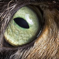 My eyes are deep ...#pigalle #eyes #macro #beautydish #hairy #catislove #instakitty #meow #chat