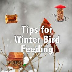 Winter bird seed and feeder tips for your birds. More info: http://www.midwestliving.com/garden/ideas/tips-for-winter-bird-feeding/