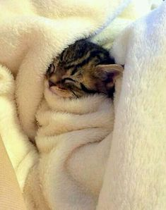 Trop mimi.. adorable. ..avoir envie de dormir..sleepy kitten.. cute