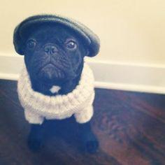 Pug. Flat cap. Sweater. .... Classy pug