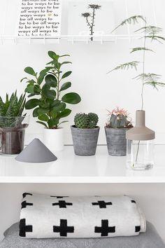 Plant Gang - beeldsteil.com Urban Jungle Bloggers #plantgang