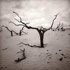 Untitled (South Texas Ranch Series)  2004