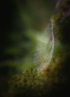 Spiders teach us patience, seclusion in the midst of chaos, honorable violence, and parental sacrifice