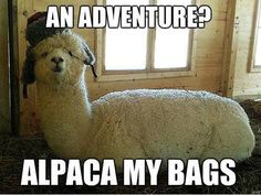 Alpaca my bags. Haha found this really funny for some reason Bad Puns, Funny Puns, Haha Funny, Funny Stuff, Funny Shit, Funny Things, Random Things, Funny Work, That's Hilarious