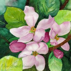 Apple Blossom Exotic pink blossom watercolor art by OneLotusDream,