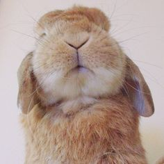 Bunny - AWWW!!!! I wuv him