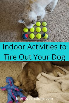 Games For Puppies, Dog Games, Dog Boredom, Puppy Pens, Dog Enrichment, Dog Yard, Frozen Dog, Diy Dog Toys, Dog Activities