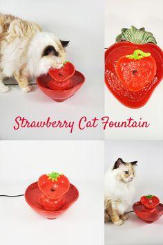 Cat Water Fountain, Water Fountains, Cute Kitchen, Kitchen Decor, Cat Health, Corgi, Cats, Artist, Wellness