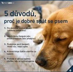 Pre toto sa to oplatí. Story Quotes, Dog Quotes, Dog Body Language, Fun Facts About Animals, Dog Best Friend, Motivational Quotes, Inspirational Quotes, English Words, True Words