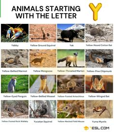 Animals that Start with Y Animals Starting With Y, Alphabetical List Of Animals, Writing Ebooks, Biology Facts, Penguin Species, Ground Squirrel, Hacker Wallpaper, Visual Dictionary, Rare Species