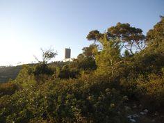 Haifa University tower as seen from the south, frrom the Carmel woods , photo mirjam Bruck -Cohen