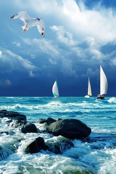 "ON A HOT SUMMER DAY, LET'S JUST SAIL AWAY……WHERE??? WHO CARES, LET'S JUST FOLLOW THE CLOUDS……LIKE ""JONATHAN SEAGULL"" UP THERE………ccp"