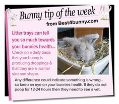 Bunny tip of the week - check those litter trays