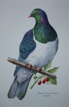 Jane Sinclair - Fine Art Painting, specialising in New Zealand Landscapes and Birds. Jane also offers Art Tuition through workshops or weekly classes. Shell Animals, Wood Pigeon, Zealand Tattoo, New Zealand Landscape, New Zealand Art, Nz Art, Maori Art, Watercolor Animals, Art Watercolour