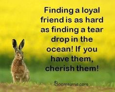 Best Friendship Sayings and Friendship Quotes Finding a loyal friend, keep it