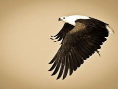 The beauty of nature:   travel the corners of the planet to see the Earth in all her glory -- so gorgeous that perhaps you'll feel inspired to save the world;  The majestic African Fish Eagle, found throughout the sub-Sahara, is the national bird of Zimbabwe and Zambia.