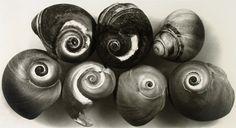 Irving Penn, Seven Shells, New York, 2002