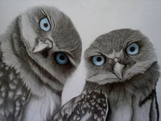 Blue eyed owls