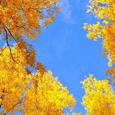 Autumn leaves in Lappeenranta Autumn Leaves, Abstract, Artwork, Cruises, Finland, Autumn, Summary, Work Of Art, Fall Leaves