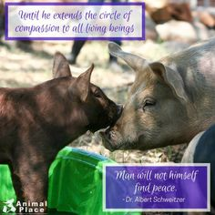 Compassion for all living things Mini Pigs, Stop Animal Cruelty, Animal Welfare, Finding Peace, Animal Rights, Oppression, Thought Provoking, Compassion, Quotes To Live By