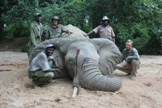 When will the killing end????  Urge the End of ALL Elephant Imports Into The USA!  Trophy hunting of any kind should not be condoned, especially of the big game sort.  US Fish & Wildlife Services should place a PERMANENT BAN ON ALL TROPHY-HUNT IMPORTS.  PLZ Sign & Share!