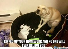 This looks like my dog... AND my dog really does eat paper if it is left out and he's unattended.