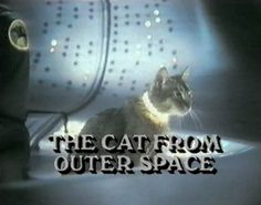 the cat from outer space!