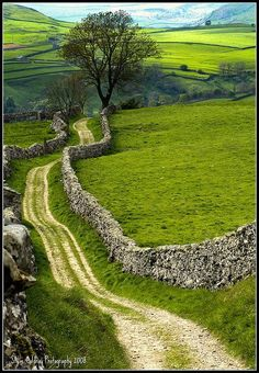 "North Yorkshire Dales. This is the scenery I pictured while reading the ""All Creatures Great & Small"" series of books.:"