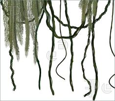 Image result for scary vine plant jungle