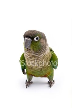 What you talkin' about? Royalty Free Stock Photo