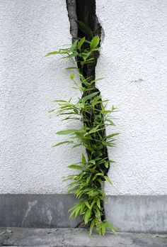 Bamboo in crack.