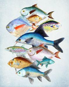 Fish Art Print Les Poissons Collage Natural by vintagebytheshore, $15.00