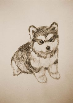 Dibujo de un cachorro de husky / Drawing of a husky puppy. Bocetos de perros / Sketches of dogs.