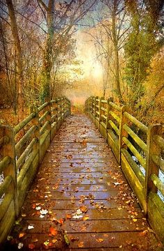Pathway to beauty and adventure